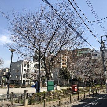 近くの公園では桜が咲き始めていました。