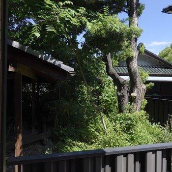 窓から顔を出して左を振り向くと、木を中心にたくさんの緑が!