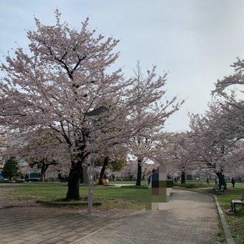 大きな公園でのんびりお散歩もいいですね。春は桜が綺麗です。