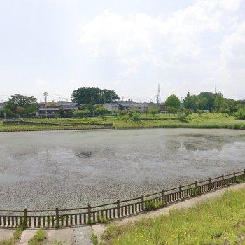 さらに大きな池のある公園もあるんです。快適さだけじゃなく、癒しまで得られるなんて。