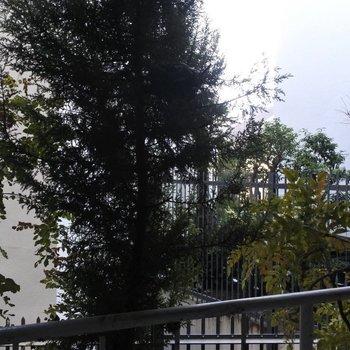 ベランダからの眺望。木、木、木。