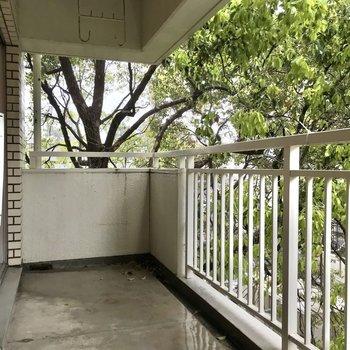 バルコニーには青々と茂る木が1本。夏は木陰になって気持ちいいだろうな〜(※写真は清掃前のものです)