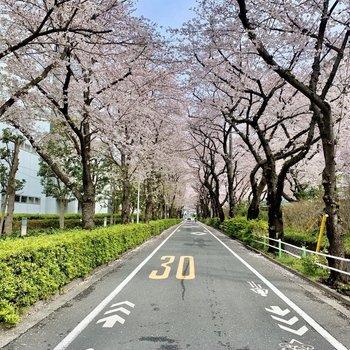 駅までには鮮やかな並木道。春は桜がきれいです。