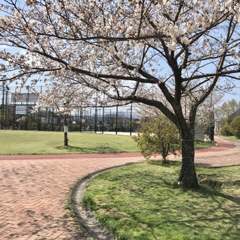 すぐ近くの公園には桜が咲いていました
