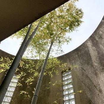 竹がスクスクと空に伸びています。