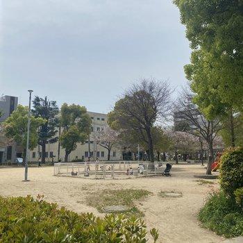 マンションのお隣は公園です。