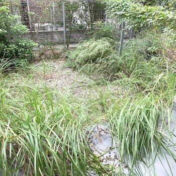 そんな一番先にはなんとお庭が。これだけ植物が育つ環境ならガーデニングも期待できそう◎