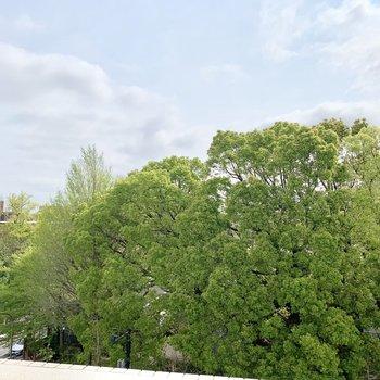 木で覆われているのは東大の本郷キャンパスなんです。