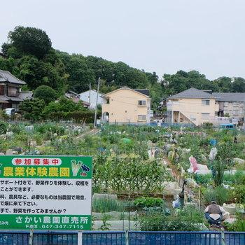 新松戸駅の目の前に農業体験農園があります。体験したい〜