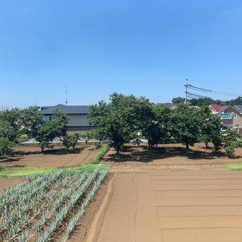 【バルコニー側洋室】目の前は畑!