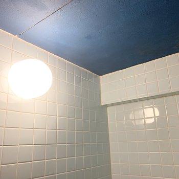 天井のブルーも絶妙なカラー◎