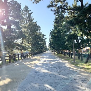 松並木でお散歩やランニングはどうでしょうか?