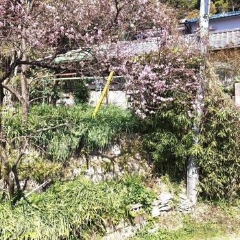 目の前にはお花が咲いていました。春ですね。