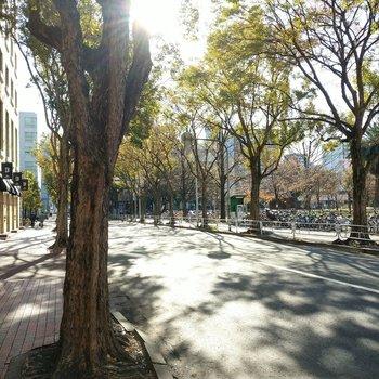 博多駅からは徒歩15分程度。こんな素敵な並木道を通るのでそんなに遠く感じませんでした。