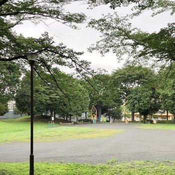 お部屋のすぐ近くにはとっても広い公園がありました。ペットとの散歩にどうですか?