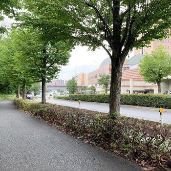 緑豊かなきれいな歩道が駅まで続きます。