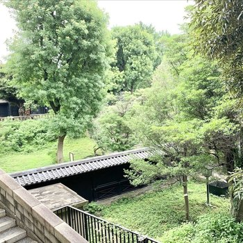 御茶ノ水駅からの通り道には緑豊かな湯島天満宮が。