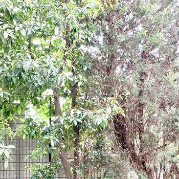 正面は木々が生えています。