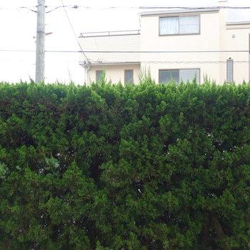 1階ですが、目の前が背の高い植栽で道路からも距離があるので安心して暮らせそう。