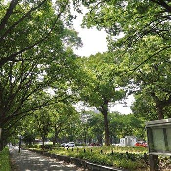 少し歩けば緑溢れる白川公園や並木道があり、散歩をしながら癒やされることも◎
