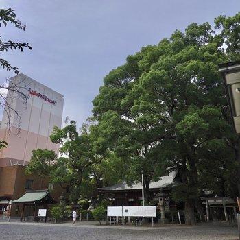 現代的な街ですが、建物の裏手には神社があり緑を感じることもできます。