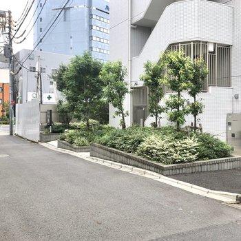 建物前の通りの様子。植物もよく手入れされています。
