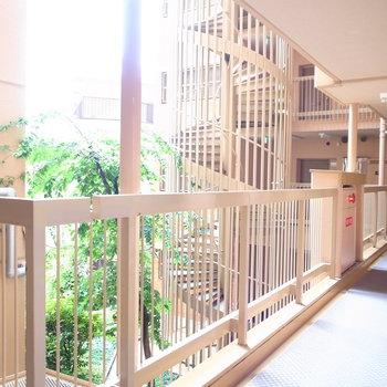 【共用部】マンションには中庭があります!それを取り巻くように廊下がつづいてます。