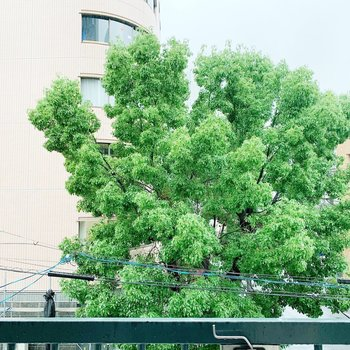 眺望から見えるこの木で癒やされちゃってください◯