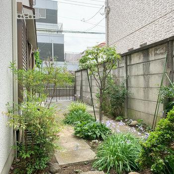 窓の外にはお庭。大家さんと兼用スペース。