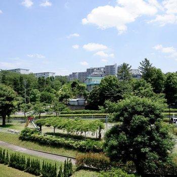 緑豊かな眺望です。お部屋に心地よい風を運びます。