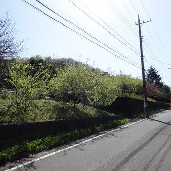 お部屋周辺は緑の多い環境です。梅が咲いていて綺麗でしたよ。