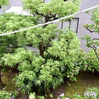 窓から見える景色1つめ! 緑の植物やお花が見えて、気分も上がりますね。