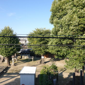 ここからは裏手の神社とたくさんの緑が見えます。