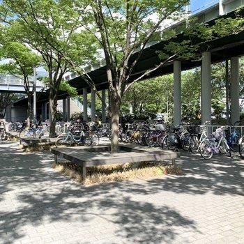 駐輪場、バイク置き場はズラッと。