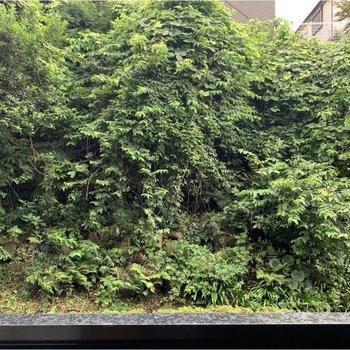 窓からは緑が見えます。周りの視線が気になりません。