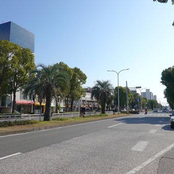 大通りにもヤシの並木があり、街全体が少し開放感のある雰囲気なんです。
