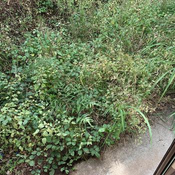 バルコニーの目の前、まずは草むしりからでしょうか