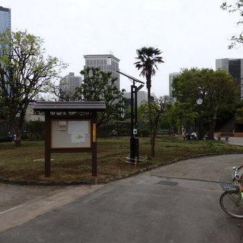 お隣の公園です。近くに緑があると心が落ち着きますね。