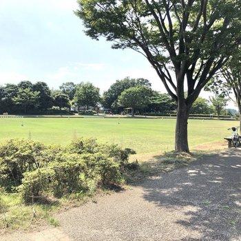お部屋の近くには公園があるなど、落ち着いた雰囲気。