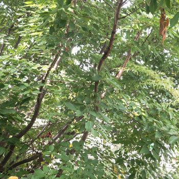 眺望は青々とした植物。癒されそうです。.