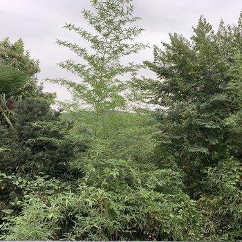 眺望は緑です。人目を気にせず暮らせますね。