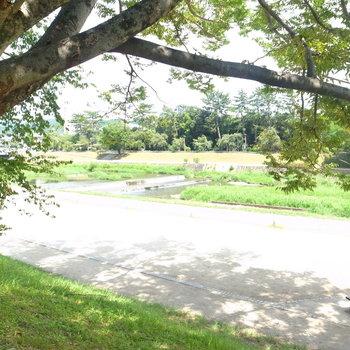【共用部】マンションは賀茂川沿いに。歩いて1分以内で来れます◎