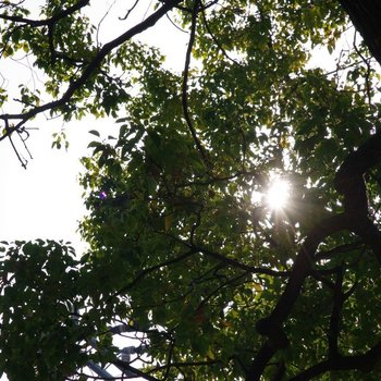 早朝に眺める木漏れ日