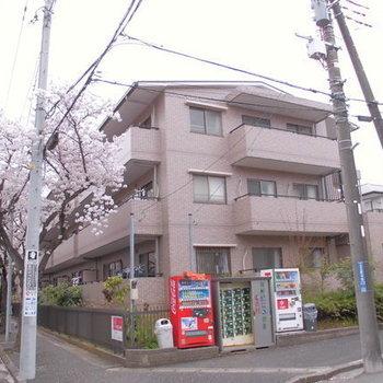 ハイプラザ桜並木B