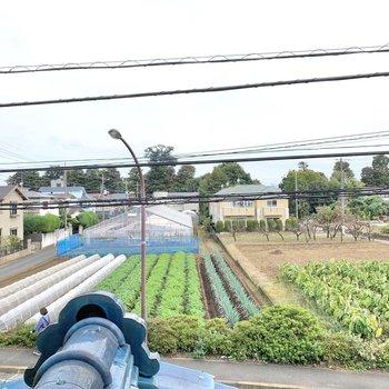 北側も野菜畑が広がっていました。