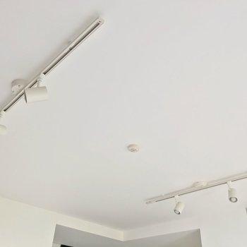 天井にはライティングレール。植物を吊り下げてもいいですね。