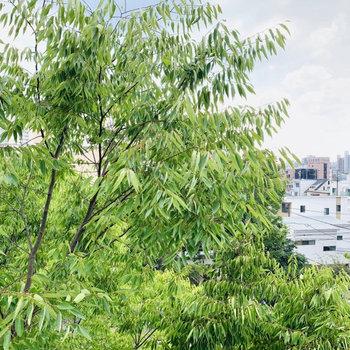 LDKの窓からの眺望はお隣の公園の木の奥の町まで全て見えます。