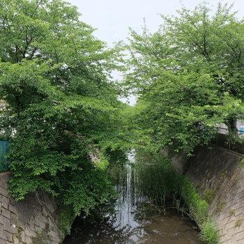 帰り道、桜の並木のある川を通ります。風流ですね。
