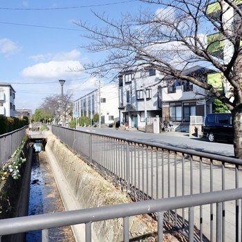 お部屋前の通りには小川が流れています。
