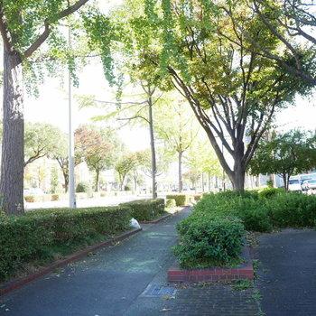 緑が気持ちいい前面の歩道